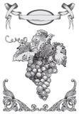 葡萄向量 免版税库存图片