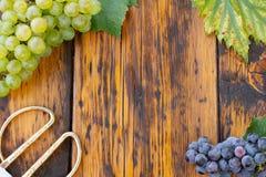 葡萄和剪刀在一张木桌上 免版税库存照片