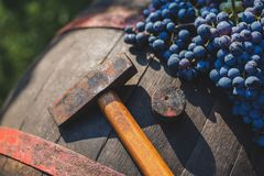 葡萄和葡萄酒酿造锤子在桶 免版税库存图片