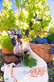 葡萄和酒构成在葡萄园里 库存图片