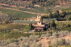 葡萄园临近在Chianti,托斯卡纳,意大利的Radda 免版税库存图片