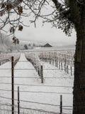 葡萄园乡区在冬天 库存照片