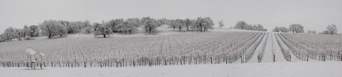 葡萄园乡区在冬天 库存图片