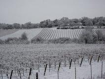 葡萄园乡区在冬天 免版税库存照片