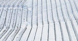葡萄园冬天 图库摄影