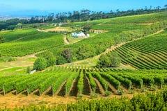 葡萄园南非 库存图片