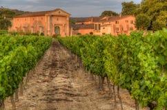 葡萄园和一个小农场在日落期间的普罗旺斯 库存照片