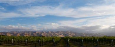 葡萄园和威瑟小山宽射击, MARLBOROUGH酒乡,新西兰 库存图片