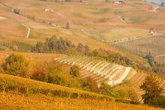 葡萄园和小山在秋天与黄色叶子在一个晴天 免版税库存图片