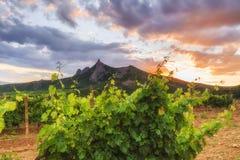 葡萄园和山的看法 图库摄影