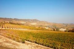 葡萄园和山麓小山在与黄色叶子的秋天在意大利 免版税库存照片