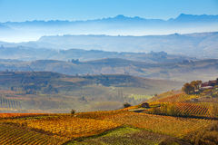 葡萄园和有雾的小山在意大利 免版税库存照片