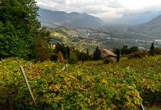 葡萄园和梅拉诺谷的看法  多尔夫提洛尔,它 免版税库存图片