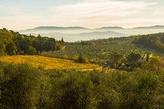 葡萄园和橄榄树全景风景  图库摄影