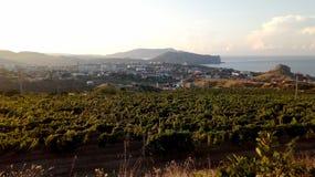 葡萄园和老城堡的风景在小山 免版税库存照片
