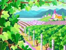 葡萄园和葡萄束 春季风景 免版税图库摄影