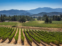 葡萄园和酿酒厂在乡区 库存图片