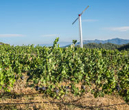 葡萄园和酿酒厂在乡区 库存照片