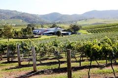 葡萄园和酿酒厂@洪特尔谷澳大利亚 免版税库存图片