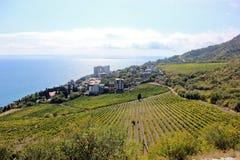 葡萄园和黑海 免版税库存照片