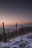 葡萄园在与月亮的冬天以垂直格式 免版税库存图片