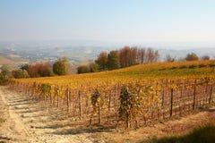 葡萄园在与黄色叶子和小山和树型视图的秋天 图库摄影
