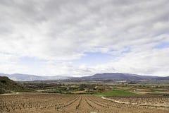 葡萄园在乡下 免版税库存照片