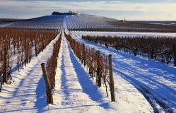 葡萄园在冬天 免版税库存照片