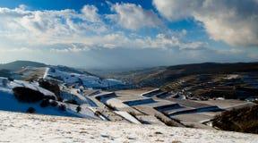 葡萄园在冬天 库存图片