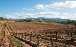 葡萄园在加利福尼亚葡萄酒生长区域在美国 图库摄影