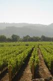 葡萄园在加利福尼亚 免版税图库摄影