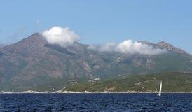 葡萄园在可西嘉岛海岛 免版税库存照片