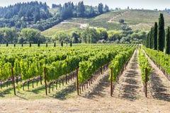 葡萄园在多小山纳帕谷地区 免版税库存照片