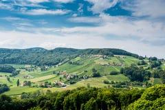 葡萄园在奥地利 免版税图库摄影