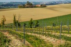 葡萄园在意大利乡下马尔什 免版税库存图片