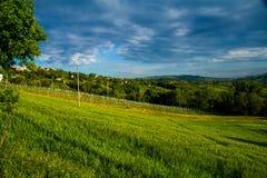 葡萄园在意大利乡下马尔什 免版税图库摄影