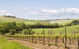 葡萄园在托斯卡纳,意大利。 免版税库存照片