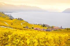 葡萄园在拉沃葡萄园梯田,瑞士 库存图片