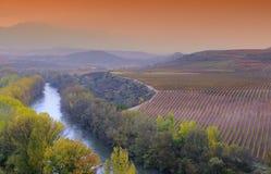 葡萄园在拉里奥哈,西班牙 库存图片