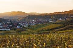 葡萄园在日落的Pfalz,德国 免版税库存照片