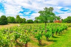 葡萄园在法国乡下在一个晴天 免版税库存照片