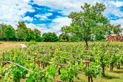 葡萄园在法国乡下 免版税库存照片