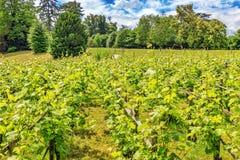 葡萄园在法国乡下 图库摄影