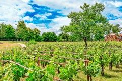 葡萄园在法国乡下 库存照片