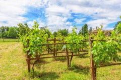 葡萄园在法国乡下 免版税库存图片