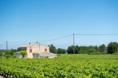 葡萄园在法国 库存照片