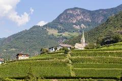 葡萄园在波尔查诺,南蒂罗尔,意大利 免版税库存图片