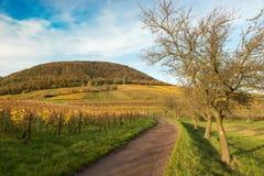 葡萄园在秋天时间的Pfalz,德国 免版税图库摄影