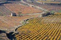 葡萄园在秋天(西班牙) 免版税库存图片