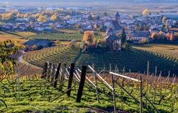 葡萄园在秋天 风景 免版税库存照片